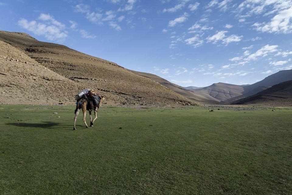 Camels travel thou varied landscapes.
