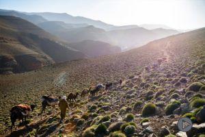 Transhumance – Ait Atta Nomads