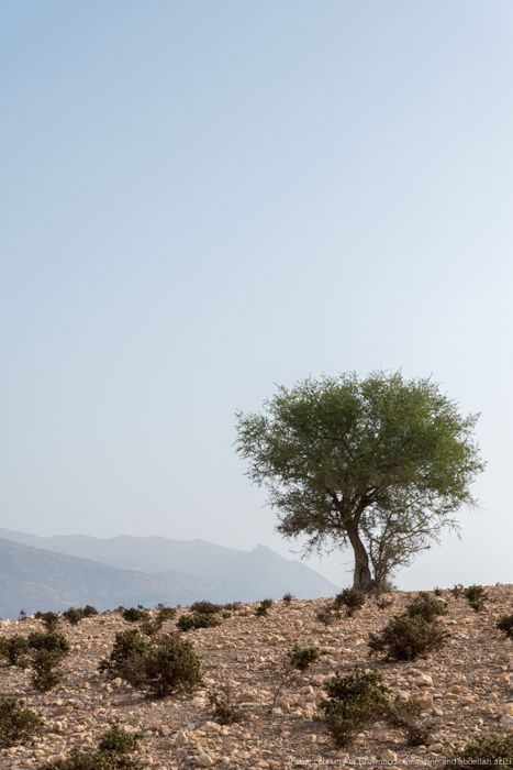 Argan Tree by ABdellah azizi