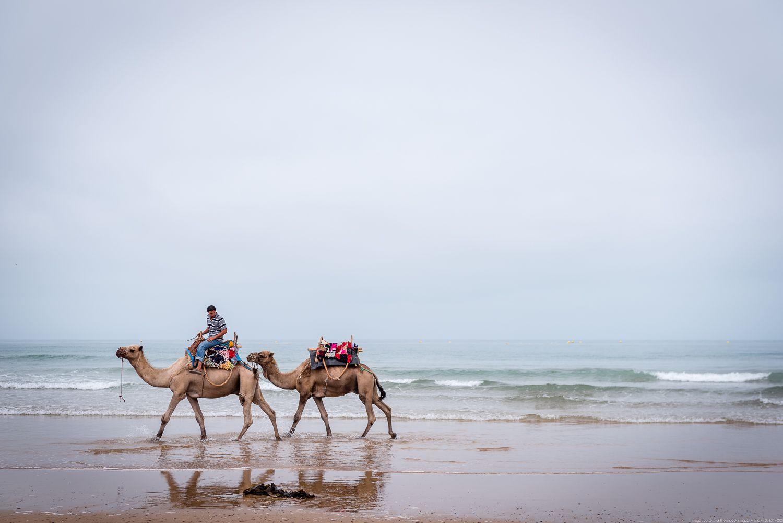 camels, Sidi Kawoki surf, Essaouira, Morocco