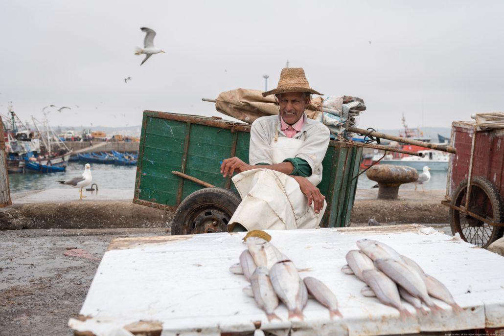 Fish seller in Essaouira port - Essaouira reportage