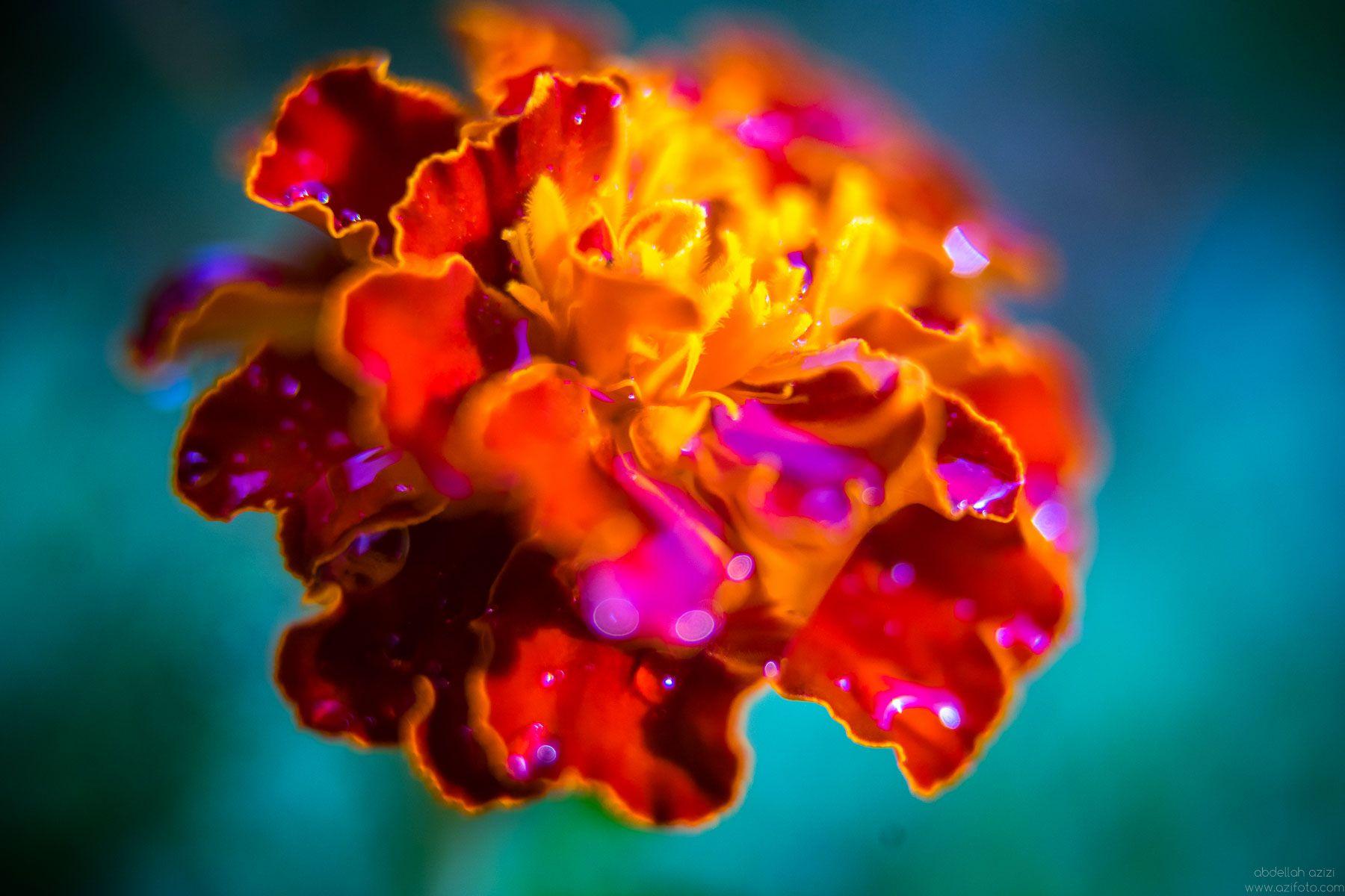 Orange flower close up
