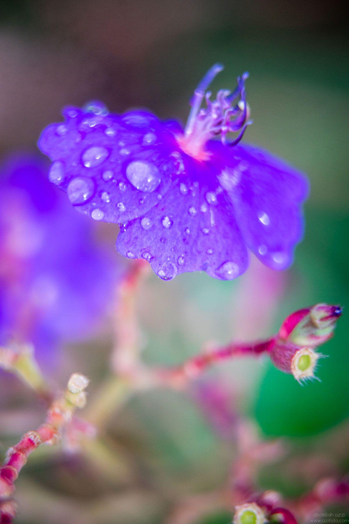 Purpler flower clos up