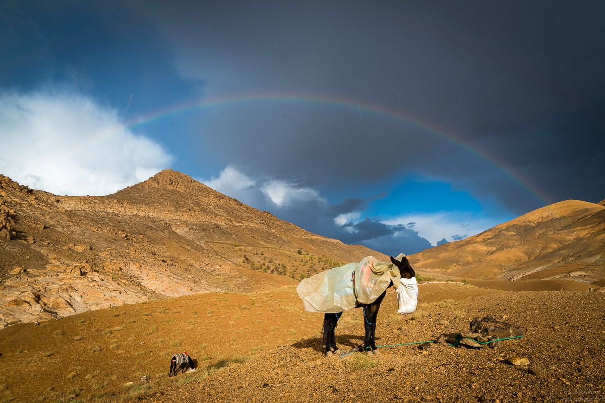 Rainbow and mulet Jbel Sirwa, Morccoa