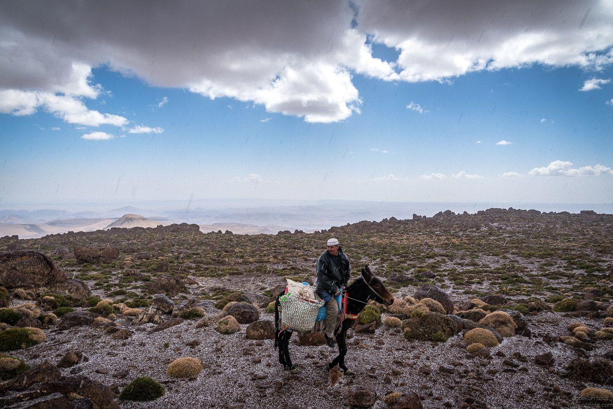 Man riding mulet Jbel Sirwa, Morccoa