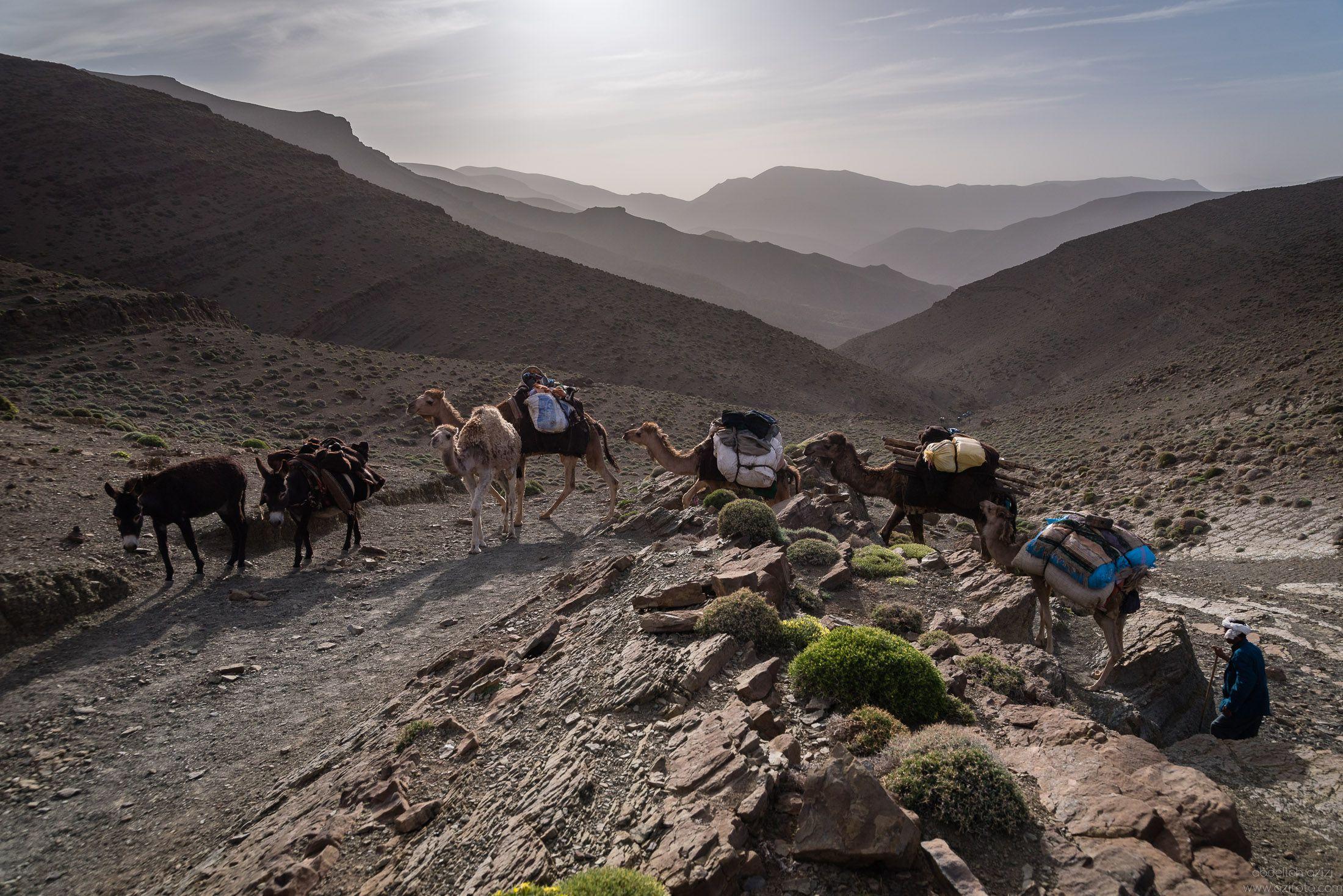 Caravan - Ait Atta Nomads