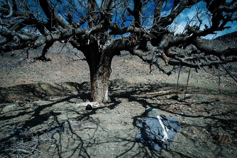 Tree from Djebel saghro - Winter