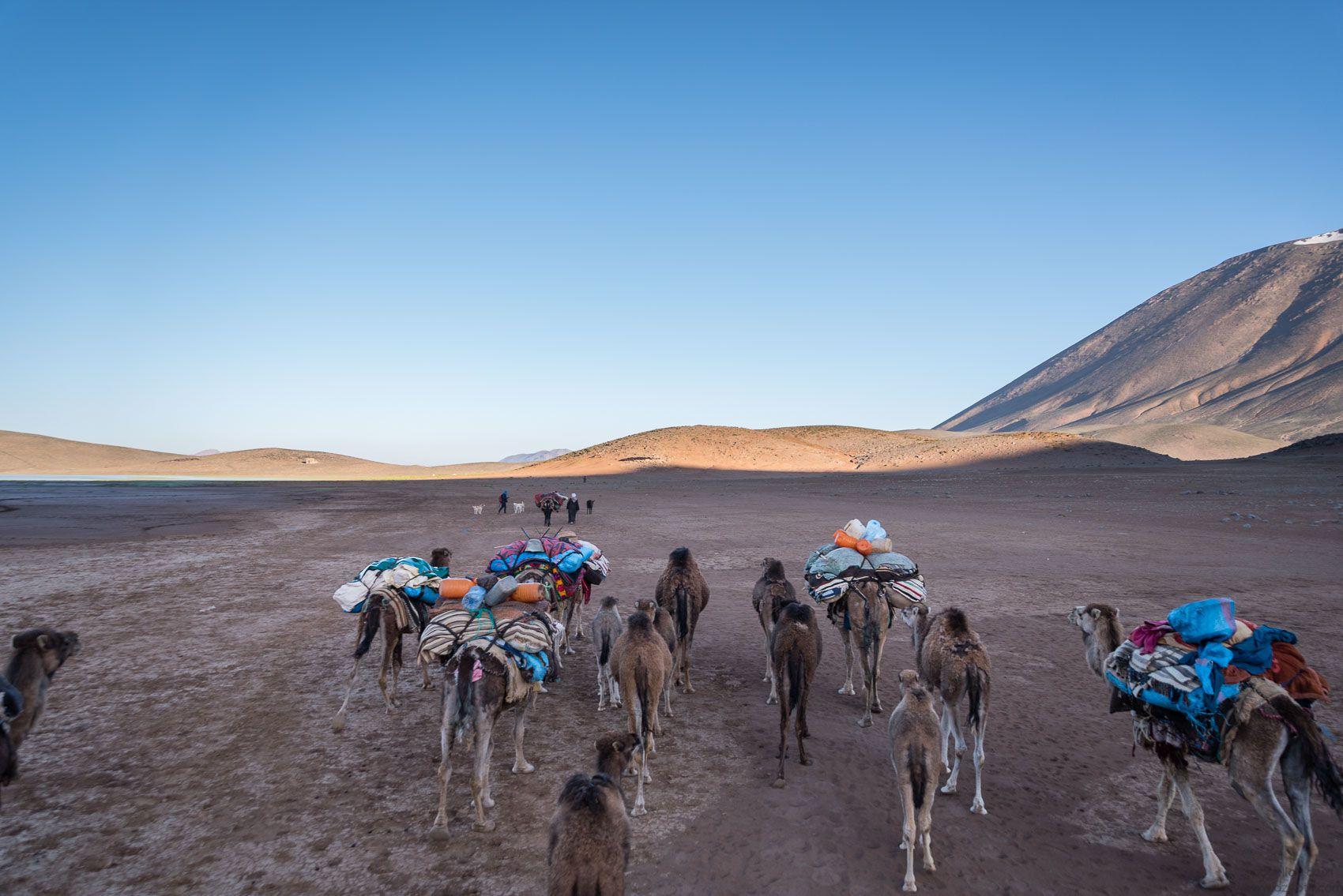 Transhumance, Ait Atta nomads, Morocco
