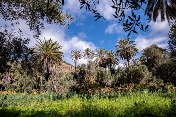 Tamzargot Plams forest, Agadir, Morocco.