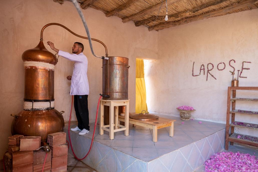 Distillation of roses