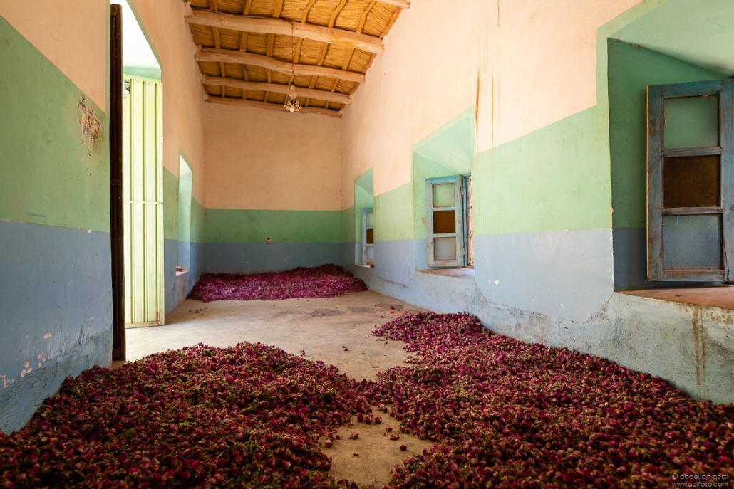 Drying roses - Kalaat MGouna Morocco