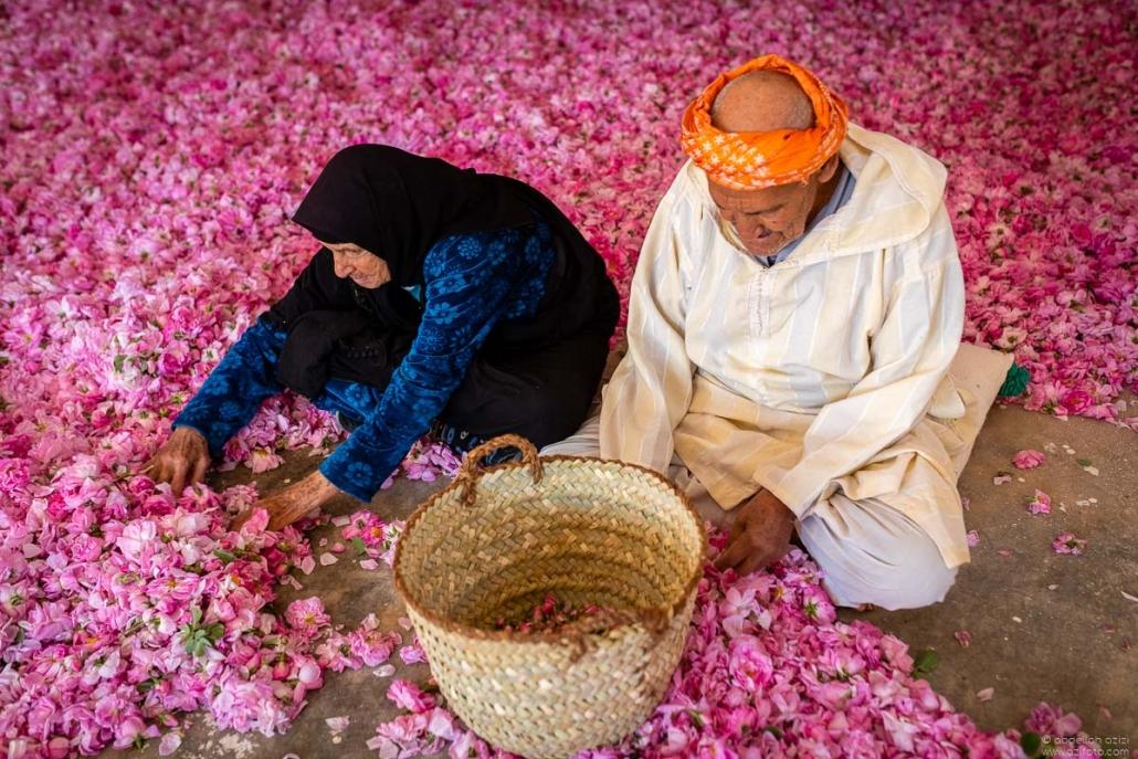 Old couple working on roses - Kalaat Mgouna
